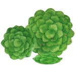 Botanicals Galax Leaf Entertainment-Set of 4 with Tray